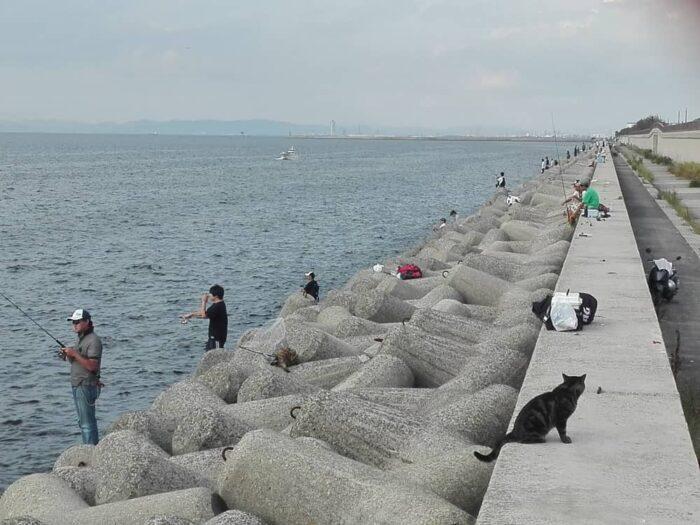 人気のタチウオが釣れる釣り場は大混雑