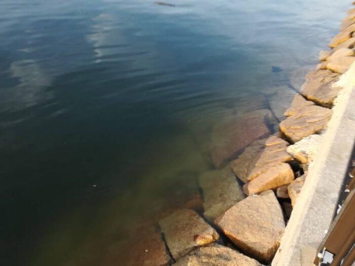タコが釣れる釣り場とポイント