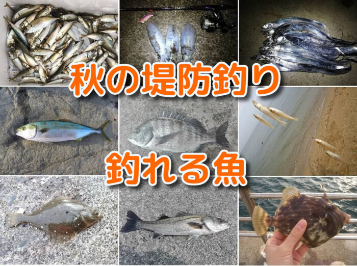 秋の海釣り(堤防釣り)で釣れる魚