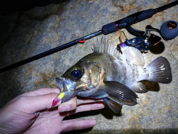 晩秋から初冬はメバル釣りの好機