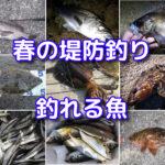 春の海釣り(堤防釣り)で釣れる魚