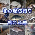 冬の海釣り(堤防釣り)で釣れる魚