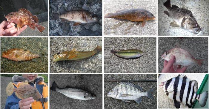 胴突き仕掛けで狙って釣れる魚