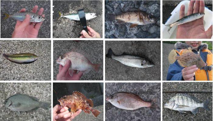 五目ウキ釣り仕掛けで狙える対象魚