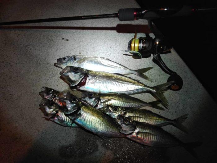 シーズン外で大物を狙う釣り方もある