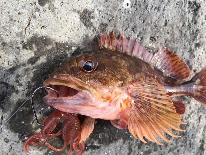 テキサスリグは根回りを攻める釣りに最適