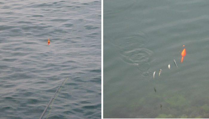 沖目にいる魚が狙える投げサビキ釣り