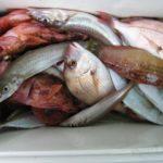 海釣りで釣れる魚