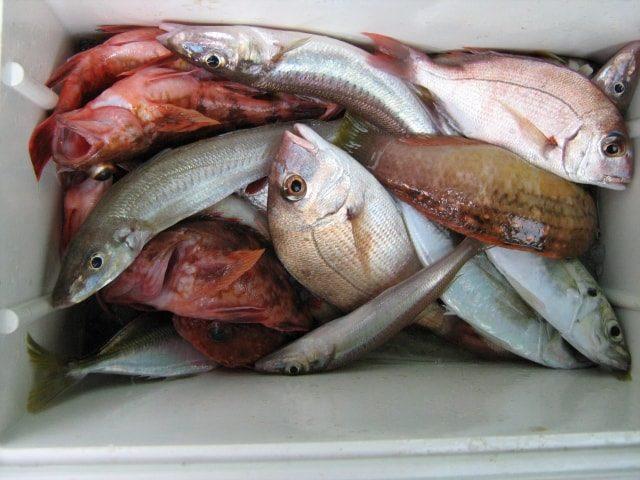 海釣り(波止釣り)で釣れる魚